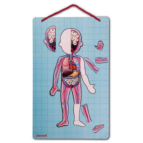 Magnetická skladačka Ľudské telo